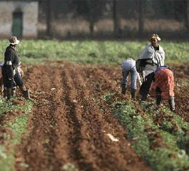 Calls for insurance for SA Farm Workers